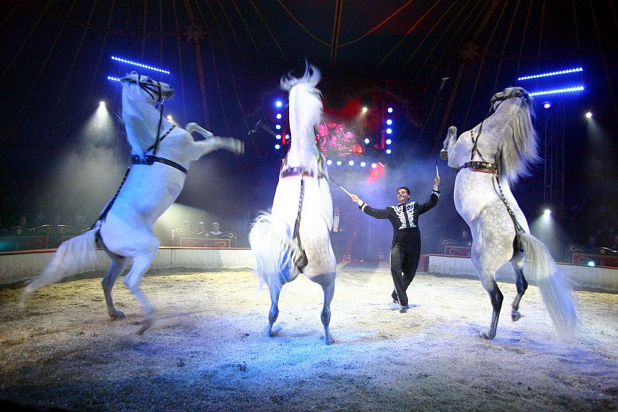 Circus Louis Knie Pferde